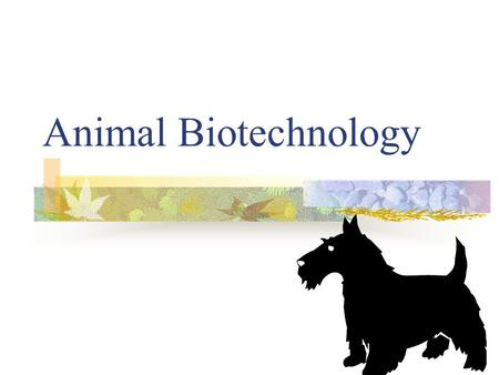 Animal Biotechnology. Animal Biotech Animals provide a number of products we use in every day life: Milk Leather Wool Eggs Meat.