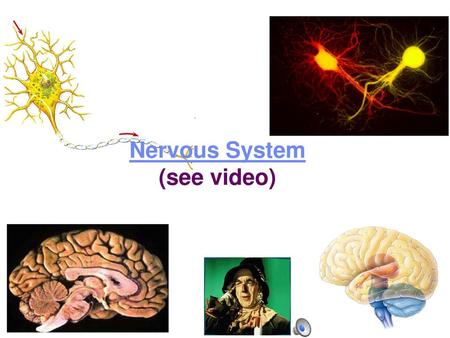 Nervous System (see video)