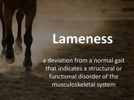 WHAT YOU NEED TO KNOW HA/H Knowledge  Conformation and Lameness