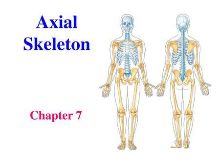 Axial Skeleton Start Ppt Video Online Download