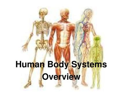 NLN General Science Anatomy Physiology Ppt Download