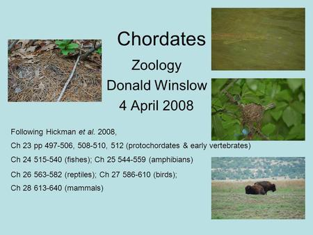 Chordates Zoology Donald Winslow 4 April 2008 Following Hickman et al. 2008, Ch 23 pp 497-506, 508-510, 512 (protochordates & early vertebrates)‏ Ch 24.