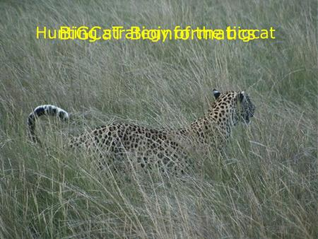 BiGCaT Bioinformatics Hunting strategy of the bigcat.