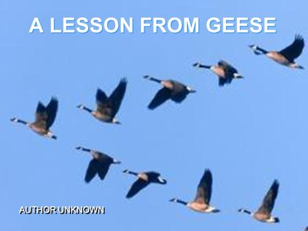 A LESSON FROM GEESE AUTHOR UNKNOWN. Have you ever wondered why migrating geese fly in a V formation? As with most animal behavior, God had a good reason.