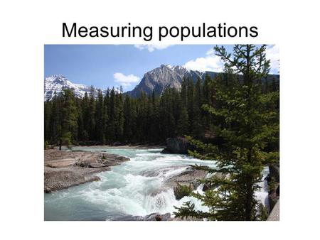 Measuring populations. Measuring populations - sampling Usually use transect or quadrat to sample Count number of organisms per sample area, then calculate.