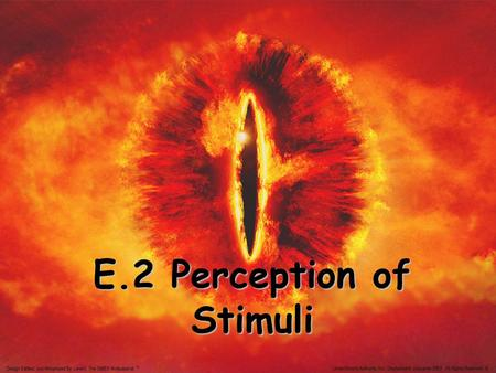 E.2 Perception of Stimuli. Four Sensory receptors: 1. Mechanoreceptors Stimulated by some type of pressure 2. Chemoreceptors respond to chemical substances.