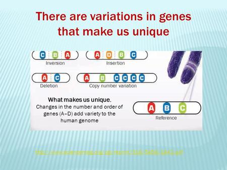 What makes us unique. Changes in the number and order of genes (A–D) add variety to the human genome InversionInsertion DeletionCopy number variation Reference.