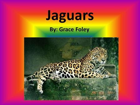 Jaguars By: Grace Foley. Diet  Jaguars hunt different kinds of prey.  The animals they hunt are:  Monkeys,  Turtles,  Armadillos,  Deer,  Frogs,