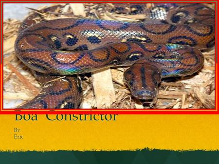 Boa Constrictor ByEric Description My animal is a Boa Constrictor. My animal is a Boa Constrictor. My animal can live underground in the sand. My animal.