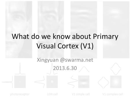 What do we know about Primary Visual Cortex (V1) 2013.6.30.