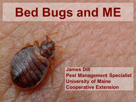 Bed Bugs and ME James Dill Pest Management Specialist University of Maine Cooperative Extension.