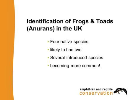 Identification of Frogs & Toads (Anurans) in the UK Four native species likely to find two Several introduced species becoming more common!