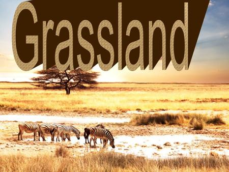 There are two type of Grasslands, Temperate Grassland and Tropical Grassland. The diffreience of Temperate Grassland and Tropical Grassland is that Temperate.