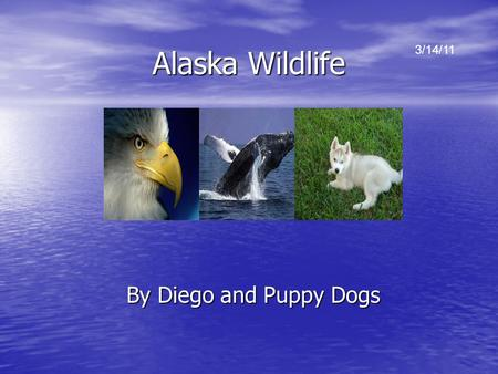 Alaska Wildlife By Diego and Puppy Dogs 3/14/11. Sea otters Most of the worlds sea otters live in Alaska. Most of the worlds sea otters live in Alaska.