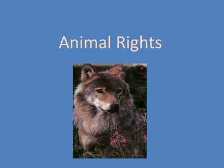 why animals have no rights cohen summary