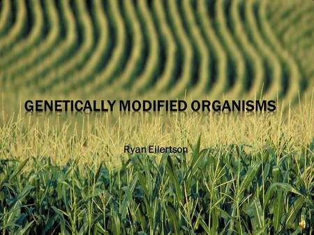 Ryan Eilertson  Genetically Modified Organisms  What Does This Mean?  Specifically Corn.