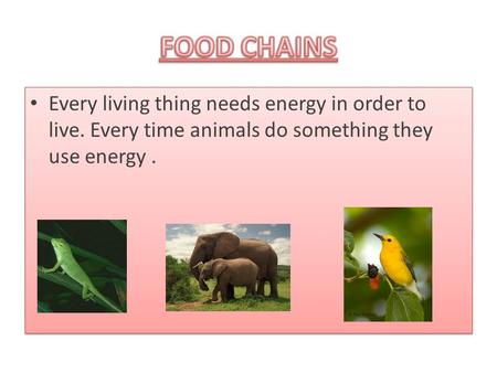 FOOD CHAINS Every living thing needs energy in order to live. Every time animals do something they use energy .