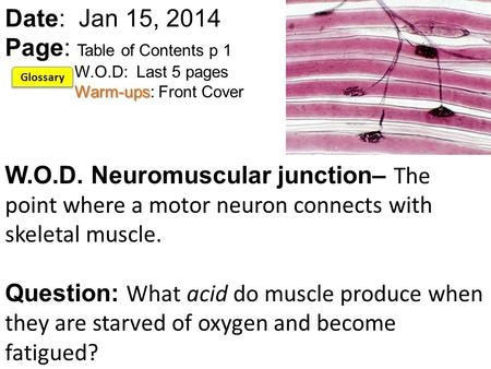 Warm-ups Date: Jan 15, 2014 Page: Table of Contents p 1 W.O.D: Last 5 pages Warm-ups: Front Cover W.O.D. Neuromuscular junction– The point where a motor.