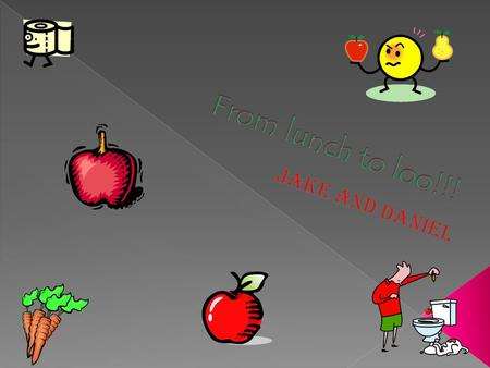  First the apple goes in your mouth, then it is chewed into tiny pieces mixed with saliva(spit).