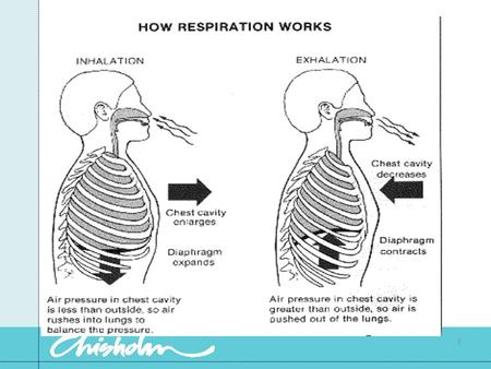1. Factors necessary for respiration Adequate O2 in the atmosphere A functioning respiratory tract Functioning thoracic muscles and nerves to control.