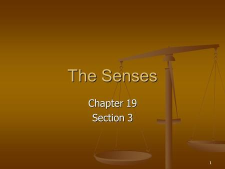 The Senses Chapter 19 Section 3.