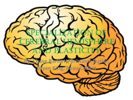 Specialization of Cerebral Hemisphere and Plasticity By: Chase Bartlett, Brittanie Butler, Bryan King, Beau Collett.
