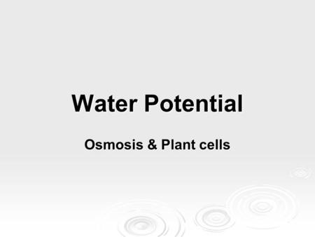 Water Potential Osmosis & Plant cells. Plants & water potential  Plants can use the potential energy in water to perform work.  Tomato plant regains.