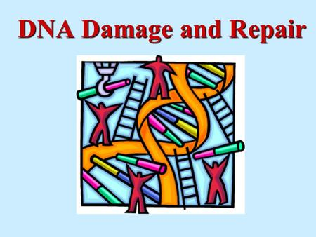 DNA Damage and Repair. = ??? It is well-known that DNA can be damaged by radiation. However, DNA is routinely damaged by oxidative stress of normal cellular.