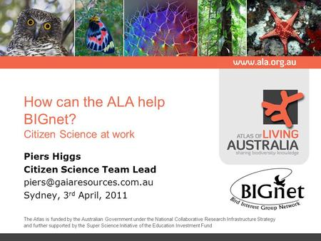 How can the ALA help BIGnet? Citizen Science at work Piers Higgs Citizen Science Team Lead Sydney, 3 rd April, 2011 The Atlas.