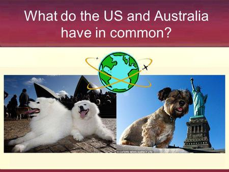 What do the US and Australia have in common?. Similar Shelter Statistics Save Rate Deaths per 1,000 Australia 53% 8 US 60% 10.