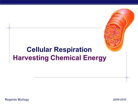 Cellular Respiration Harvesting Chemical Energy