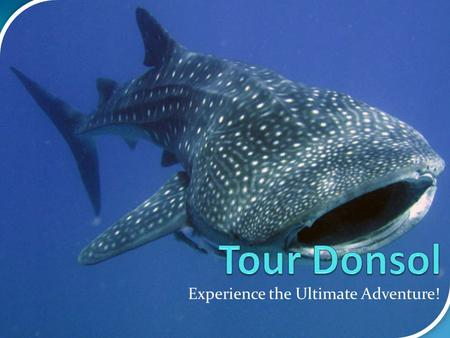 Experience the Ultimate Adventure!. What is Donsol? Until the 'discovery' of whale sharks off the coast here in 1998, Donsol, was an obscure, sleepy fishing.