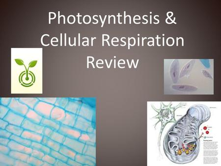 Photosynthesis & Cellular Respiration Review