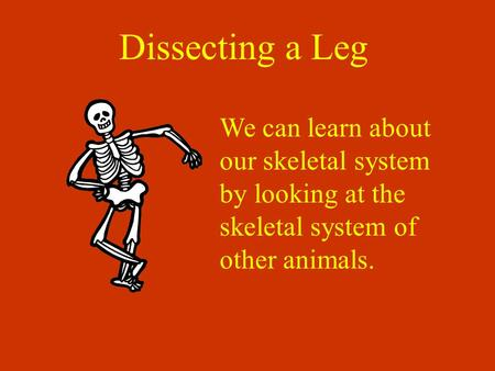Dissecting a Leg We can learn about our skeletal system by looking at the skeletal system of other animals.