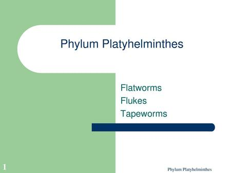 Platyhelminthes ppt bemutató Phylum Platyhelminthes : Animal classification (NEET) pinworm fejlődés