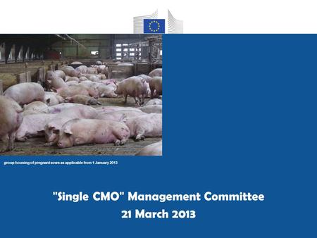 Group housing of pregnant sows as applicable from 1 January 2013 Single CMO Management Committee 21 March 2013.