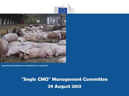 Group housing of pregnant sows as applicable from 1 January 2013 Single CMO Management Committee 29 August 2013.
