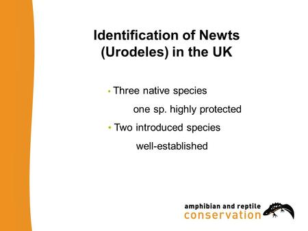 Identification of Newts (Urodeles) in the UK Three native species one sp. highly protected Two introduced species well-established.