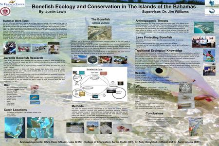 Bonefish Ecology and Conservation in The Islands of the Bahamas By: Justin Lewis Supervisor: Dr. Jim Williams Summer Work Term For my AQUA 400 work term.
