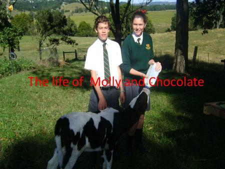 The life of Molly and Chocolate