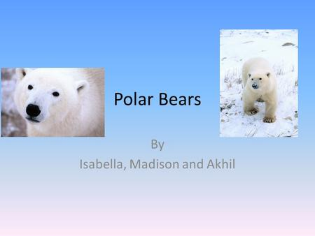 Polar Bears By Isabella, Madison and Akhil. Table of Contents There size…3 Ice /water…4 Fun facts…5 Glossary…6.