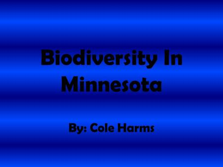 Biodiversity In Minnesota By: Cole Harms. Mourning Dove The mourning doves scientific name is Zenaida macroura. The mourning dove is a blue gray bird.