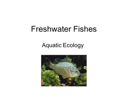 Freshwater Fishes Aquatic Ecology.