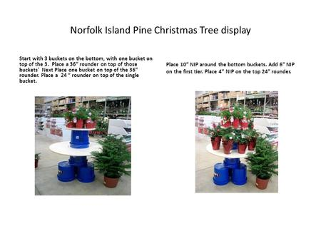 "Norfolk Island Pine Christmas Tree display Start with 3 buckets on the bottom, with one bucket on top of the 3. Place a 36"" rounder on top of those buckets'"