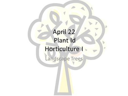 April 22 Plant Id Horticulture I Landscape Trees.