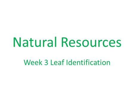Natural Resources Week 3 Leaf Identification. White oak group Seeds mature in one year Wood pores are closed Lobes are rounded.