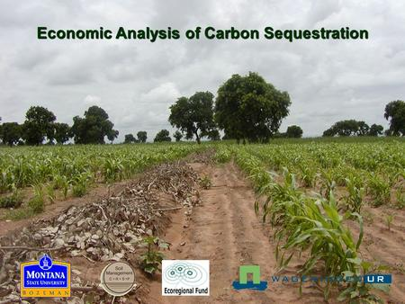 Economic Analysis of Carbon Sequestration. Hypothesis: By adopting more sustainable practices, farmers can sequester C in soil at a cost competitive with.