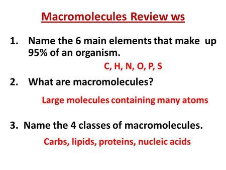 Macromolecules Review Ws
