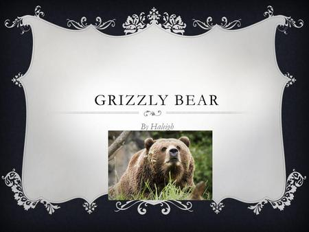 GRIZZLY BEAR By Haleigh.  Grizzly bears are about 6-7 feet long.  Adult males weigh 300-850 pounds.  Grizzly bears colors are dark brown, cream to.