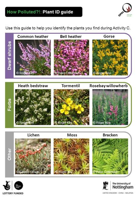 How Polluted?!: Plant ID guide Use this guide to help you identify the plants you find during Activity C. Other Gorse Dwarf shrubs Forbs Rosebay willowherb.